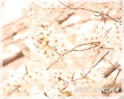 28-桜3