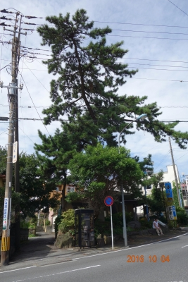 DSC04334松