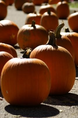 pumpkin002.jpg