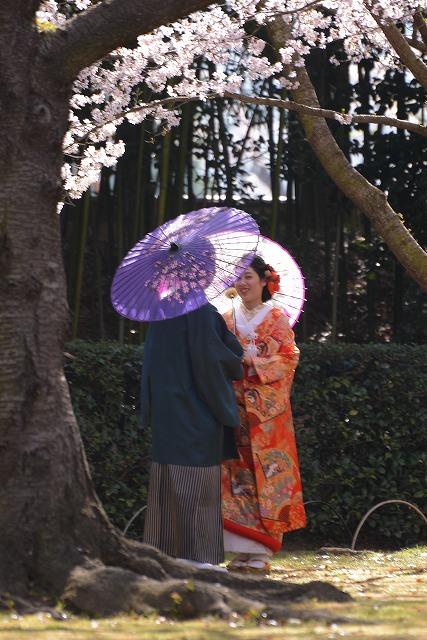 後楽園の桜23