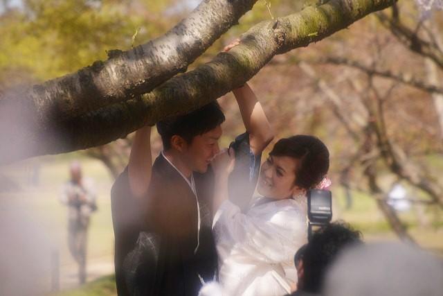 後楽園の桜30
