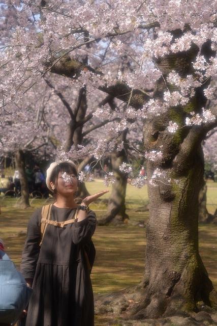 後楽園の桜32