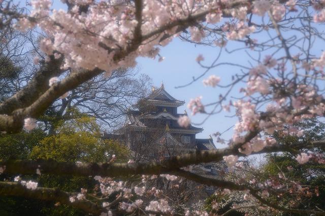 後楽園の桜34
