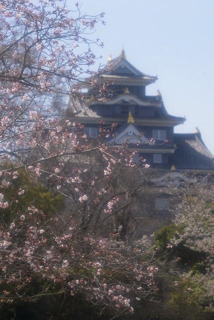 後楽園の桜35