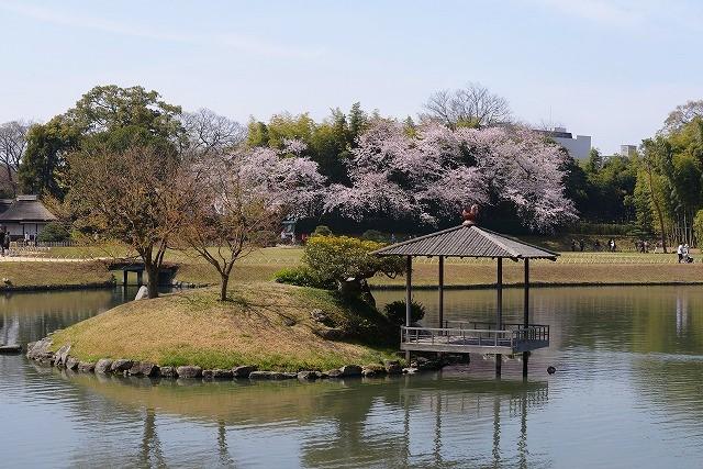 後楽園の桜37