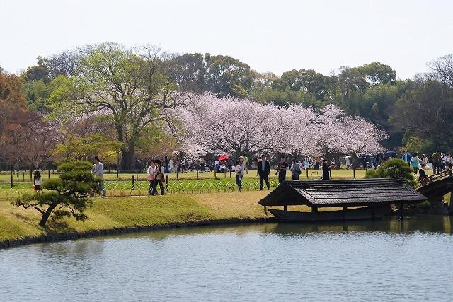 後楽園の桜39