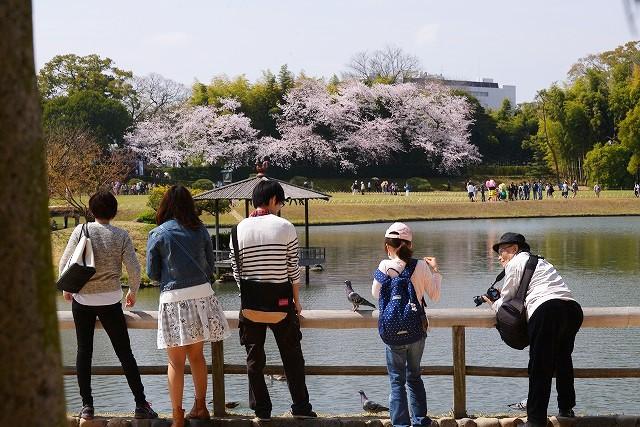 後楽園の桜40