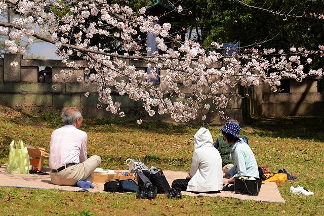 後楽園の桜44