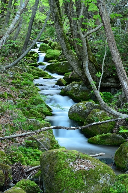 久田川渓流1