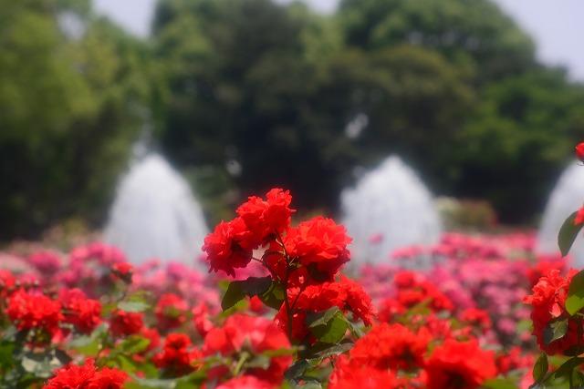 須磨離宮公園15