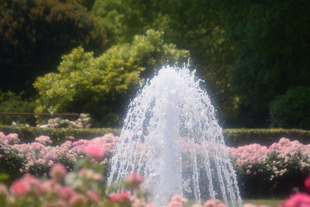 須磨離宮公園19
