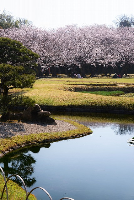 後楽園の桜17