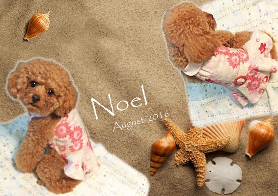 Noel_03.jpg
