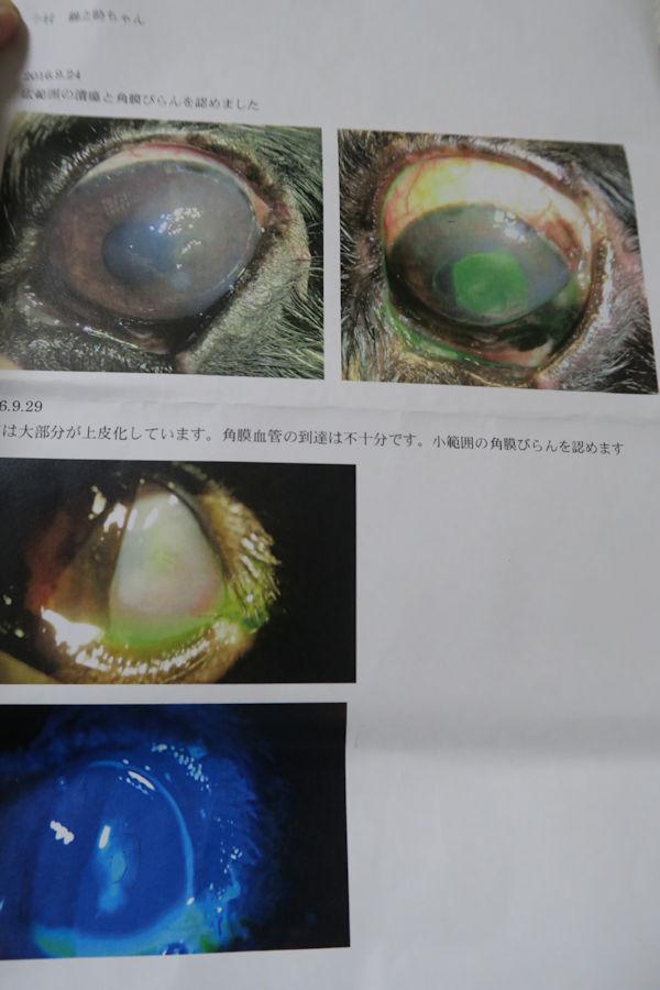 1001-2.jpg