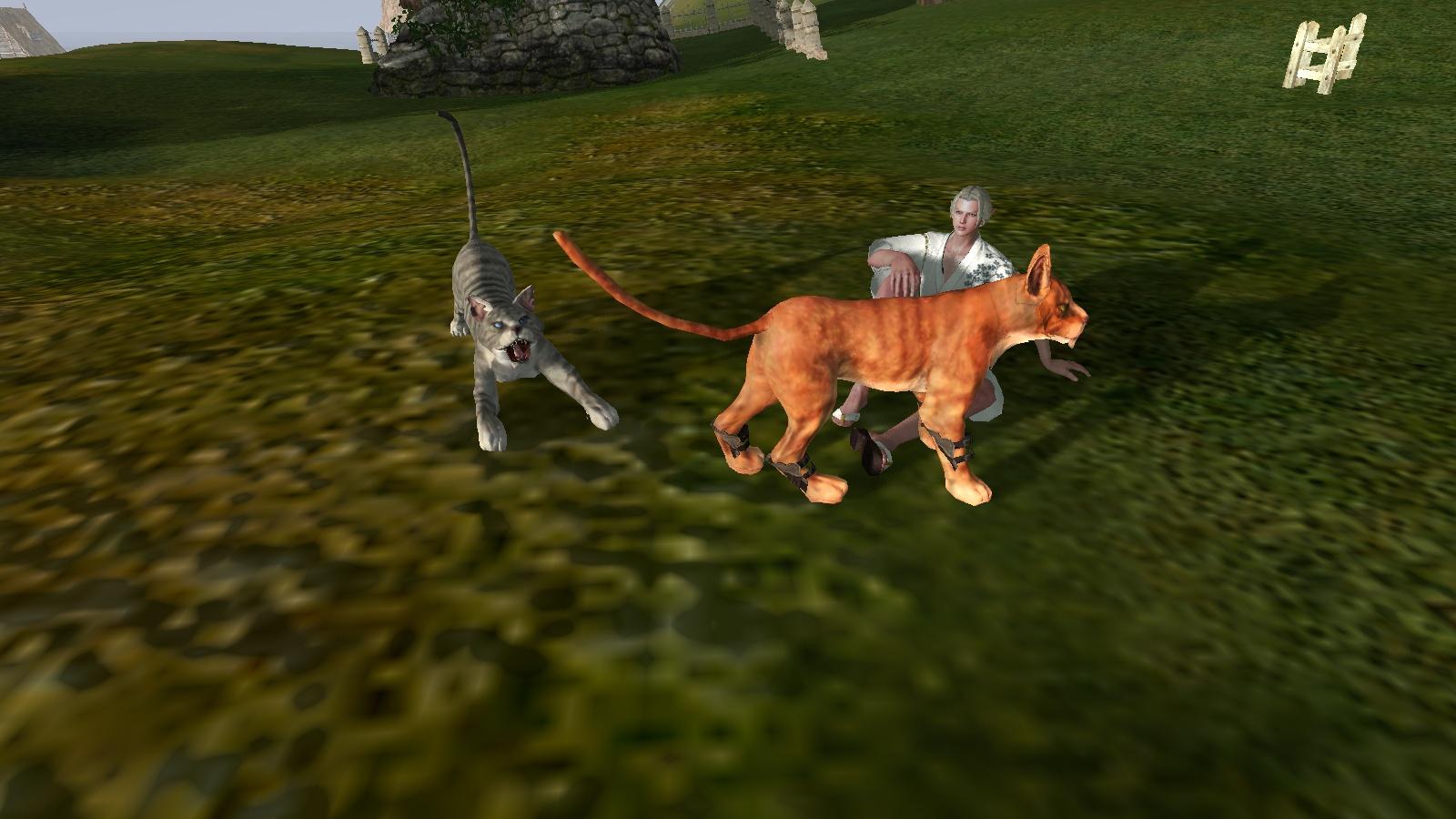 ネコと戯れるフレ