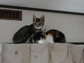 ミラ&ジーノ