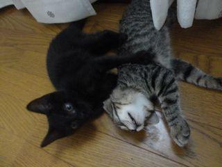 ダイスケとジーノ
