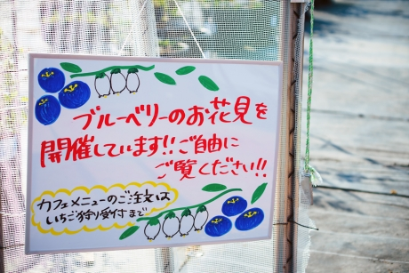 blueberry_5.jpg