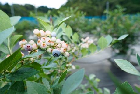 mberry_4.jpg