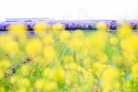 nagahama_canon_3.jpg