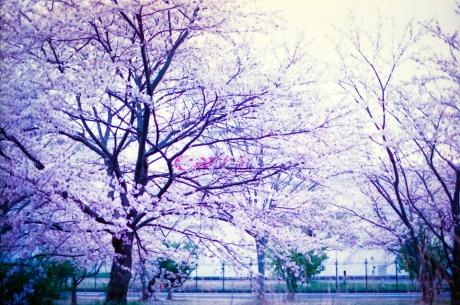 nagahama_canon_4.jpg