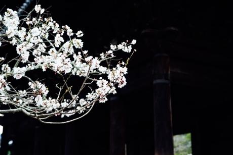 nanzenji_2_20160406224730de8.jpg