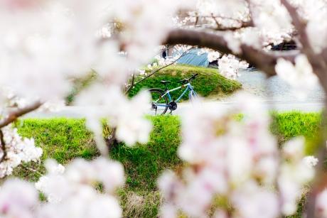 sakura_rode1.jpg