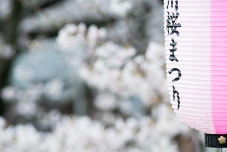 spring_has_come_6.jpg