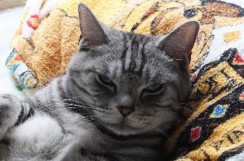 おっちゃん猫1