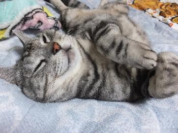 本日は疲れました