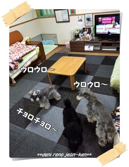 20160607_1b.jpg