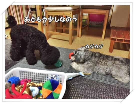 20160709_1d.jpg