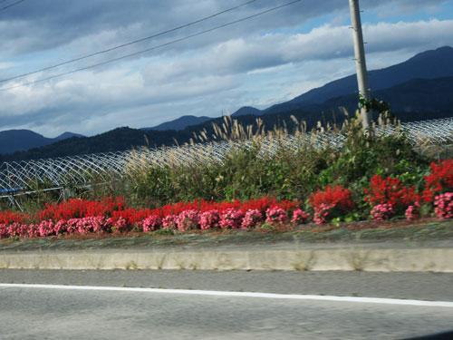 お花ロード