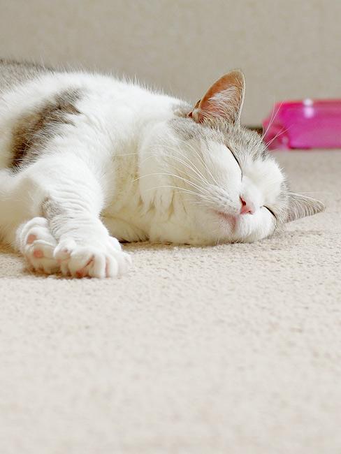 猫の日向ぼっこは余韻も大切…?