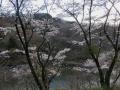 青葉山と広瀬川と桜