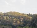 山桜が見頃