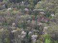 峠から見た山桜