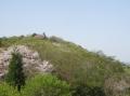 山桜と新緑