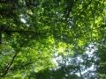 緑のステンド