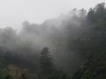 霧の湧く山
