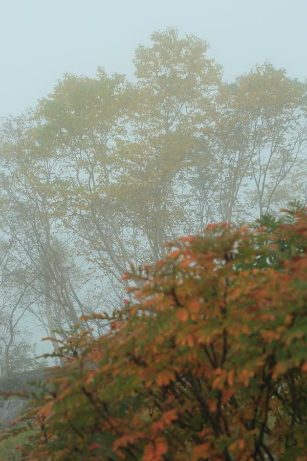 霧の中の秋