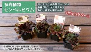 taniku_y3_1.jpg