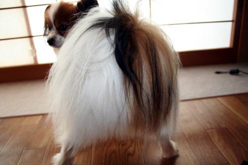 尻毛の様子20080605054115