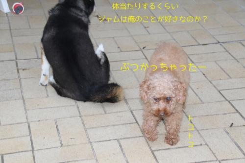 褒め言葉ロザ編2