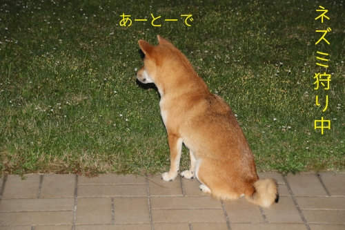 ロザ花火編2