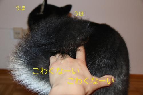 ロザ花火編6