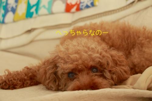 ロザ花火編10