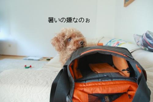 夏のアツサニモマケヌ