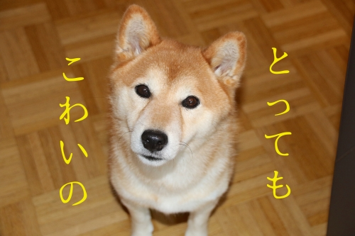 LINE音にびびる犬