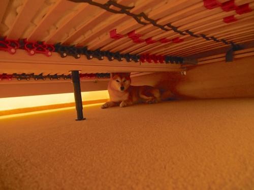 客室ベッドの下で